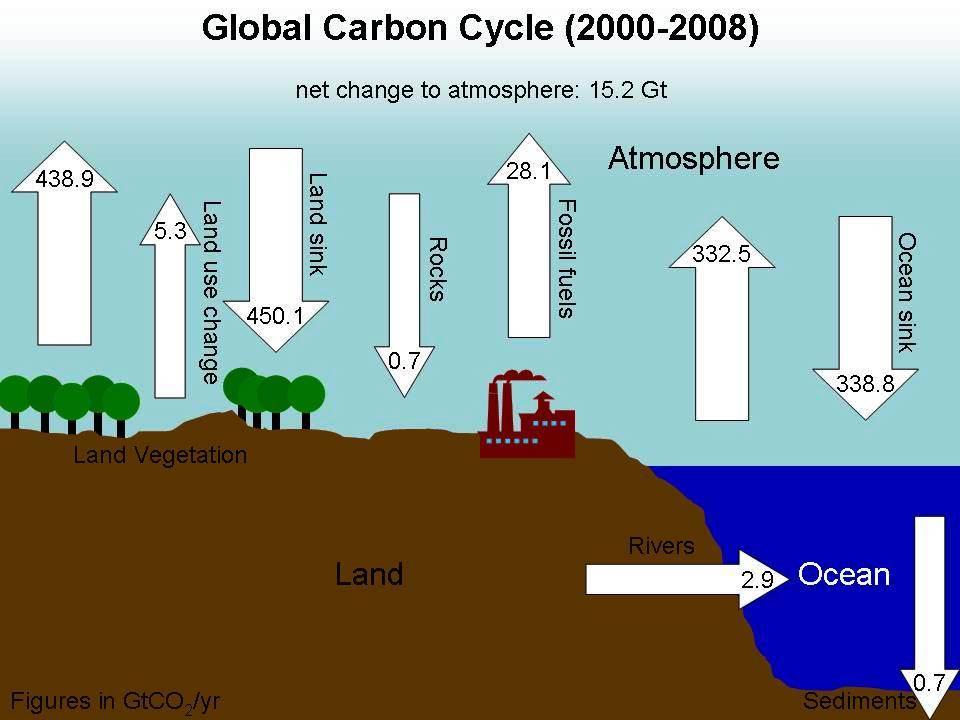 drivhusefekten svekke seg selv med mere skog