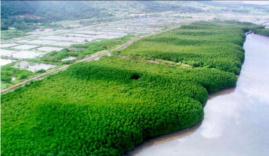 Modell av den planlagte Myeik University Mangrove Park