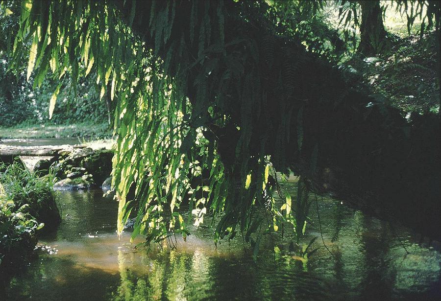 West Mau forest, Kenya. Foto: Åke Bjørke