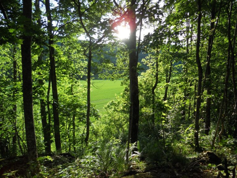 100 hektar skog värde