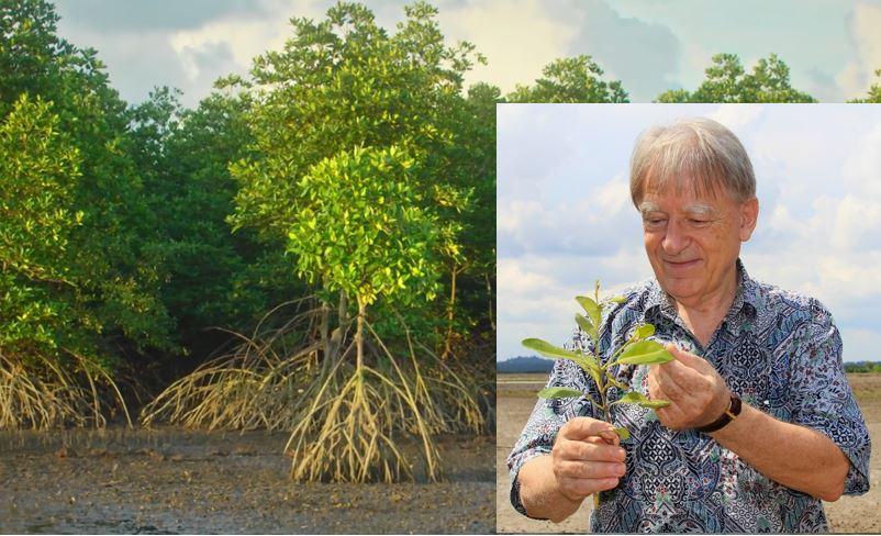 mangrove med arne