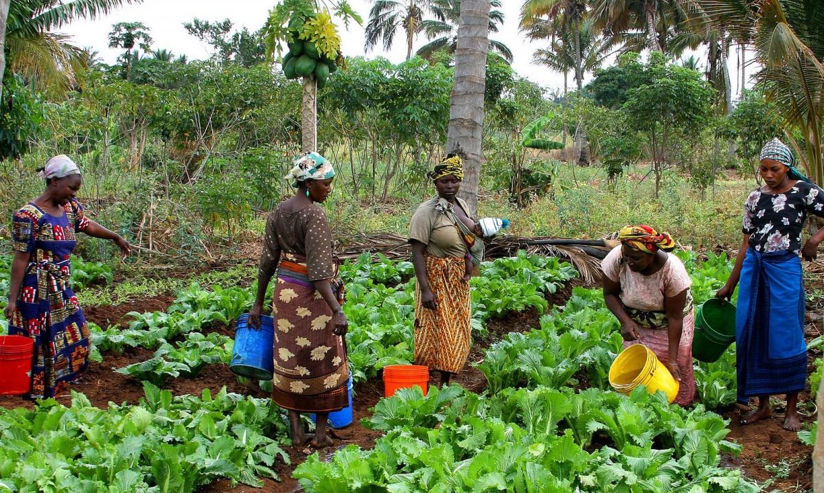 afrika kvinner jordbruk