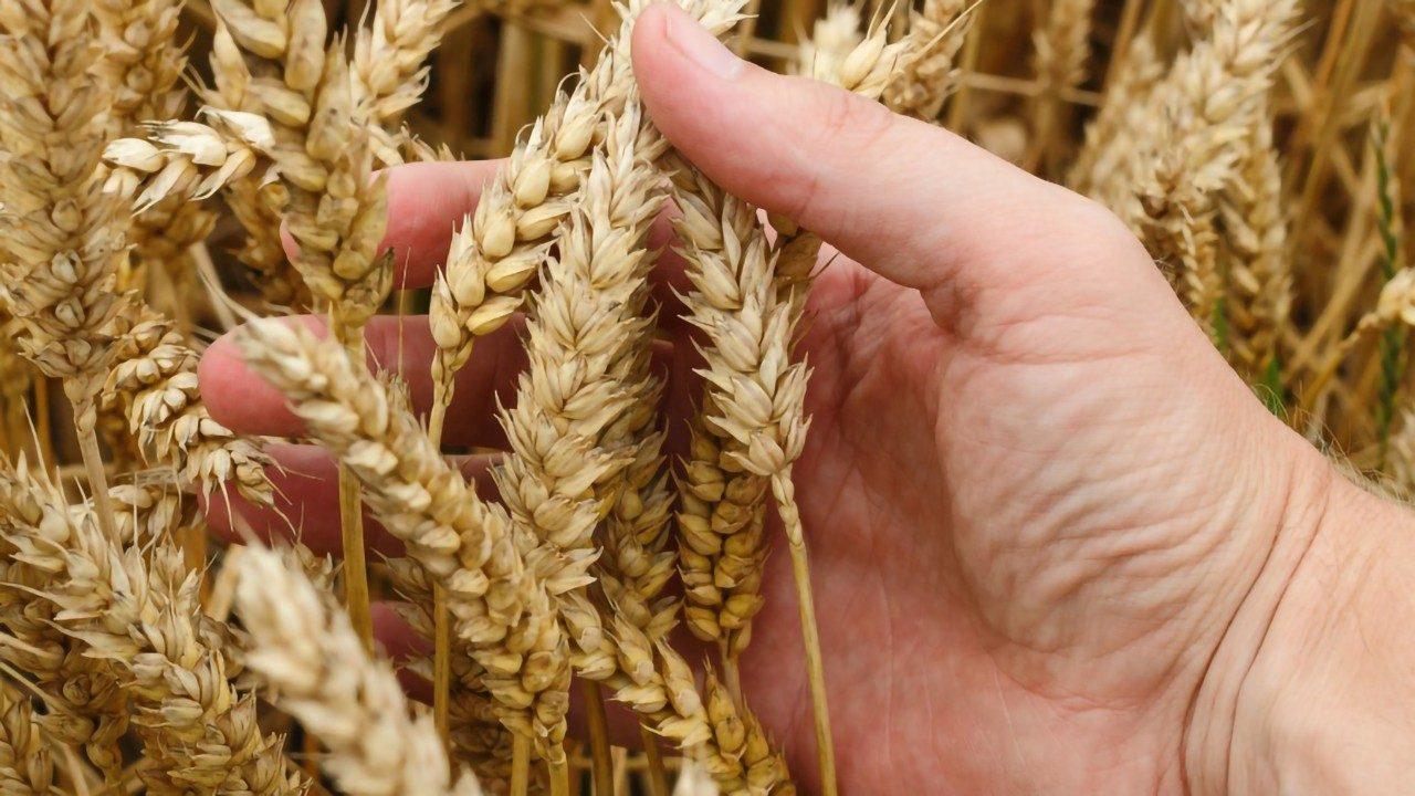 god hvete